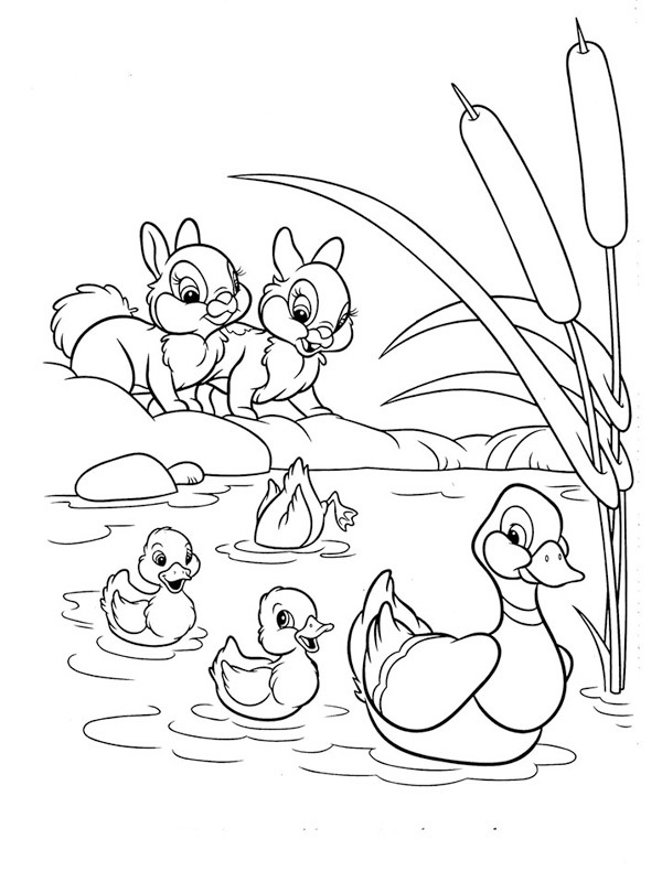 Ducks and rabbits