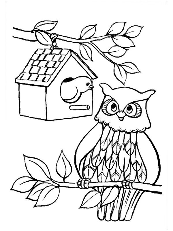 Bird and owl
